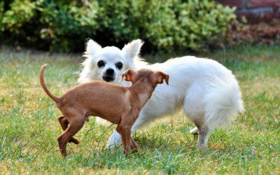 Založení spolku Zdraví pro zvířata